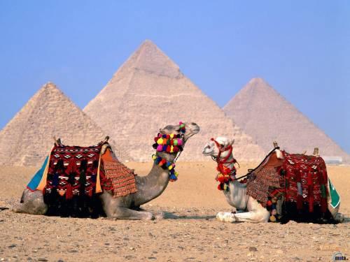 Фото верблюды на фоне пирамид египта